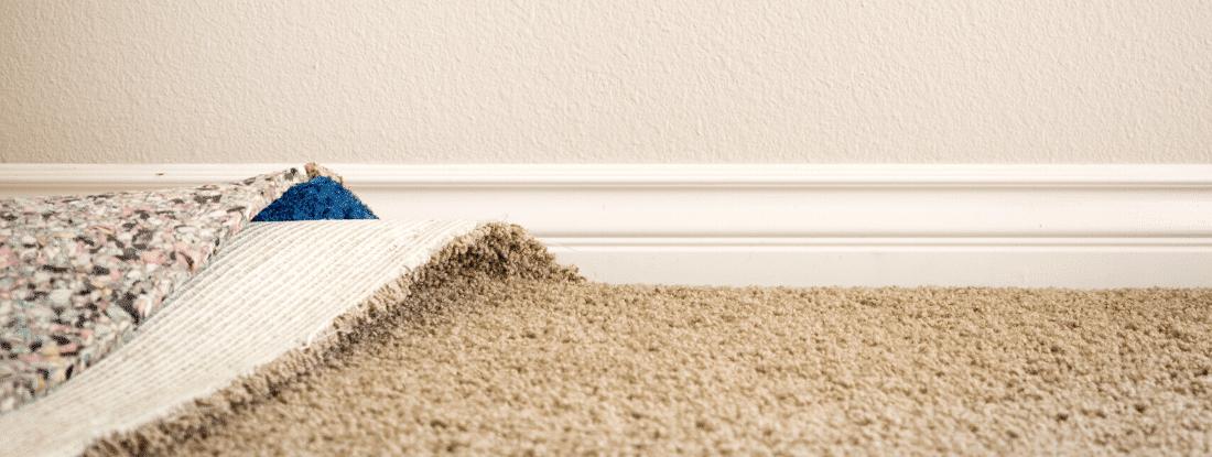 carpet-mold-damage