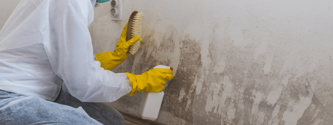 florida-mold-remediation-guidelines